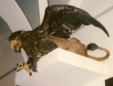 Rogue taxidermy griffin, Copenhagen. Wikimedia.