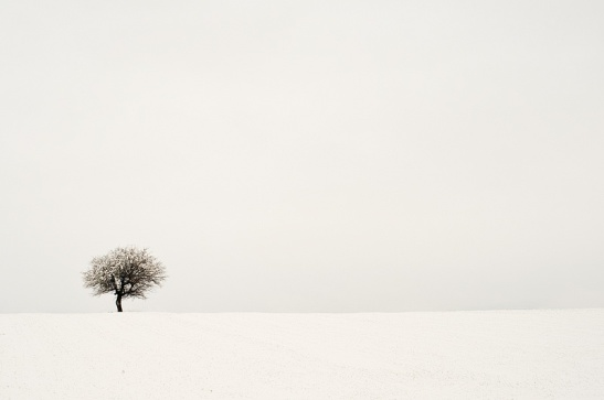 Winter_tree_by_NickKoutoulas