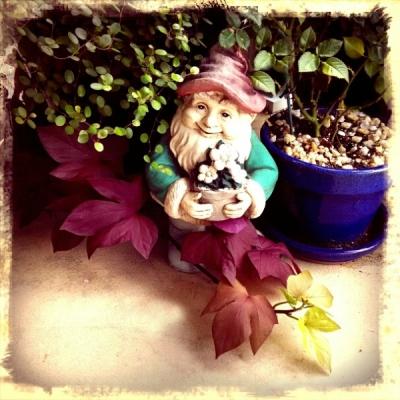7 23 2014 gnome 6