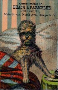sick dog 2 front