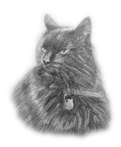 drawn cat