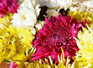 Chrysanthemums bouquet