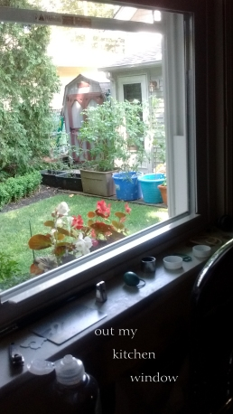 out-my-kitchen-window-as-web-save