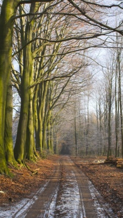 ws_leafless_trees_path_wood_pile_640x1136