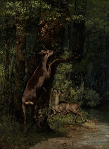gustav-courbet-deer-in-the-forest-1868