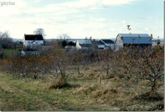 privets-farm-2