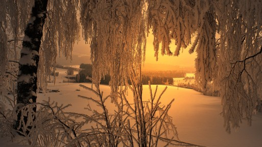 Wonderful Dawn Winter Scene Trees Valley Farms Desktop Images