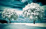 winter-landscape-nature-wallpaper