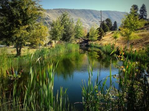 Frog_pond2000