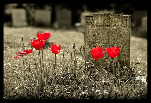 poppies on the graveyard