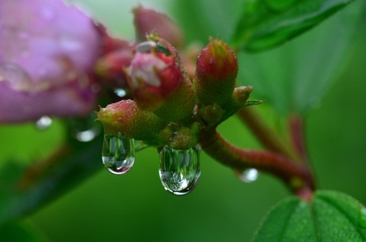jan_21_5758_morning_dew_drops