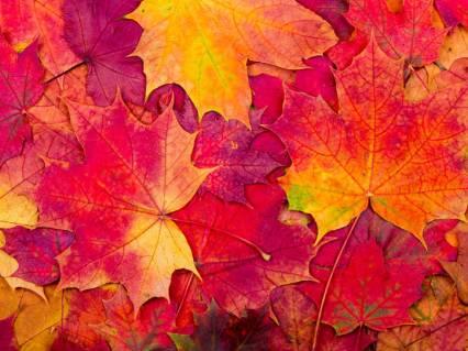 autumn new logo