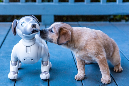Robots and Dogs.jpg
