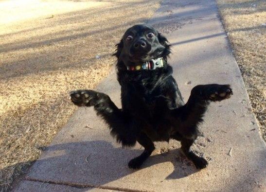 Derpy Dog.jpg