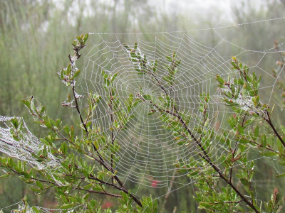 09-spiderwebs-manlydam-27august2011-038