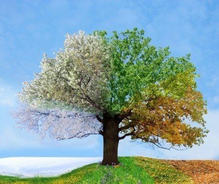 Four-Seasons-Tree-Winter-Spring-Fall-Summer-Nature