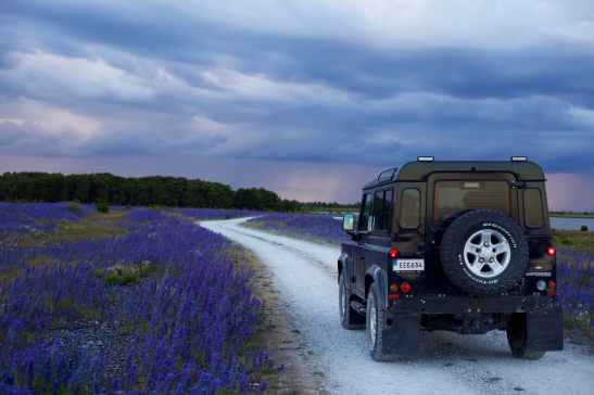black suv in between purple flower fields